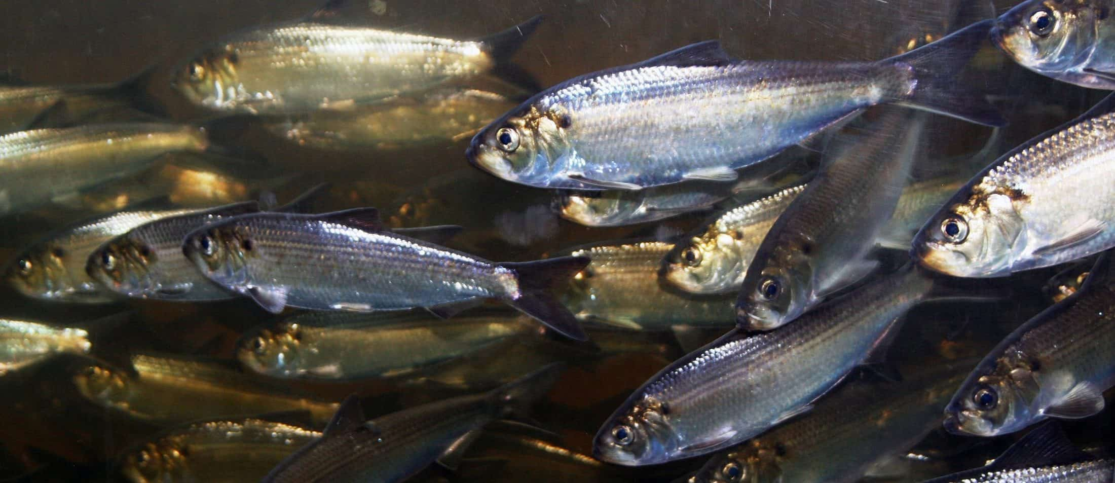 Mcht Alewives 2400x1040