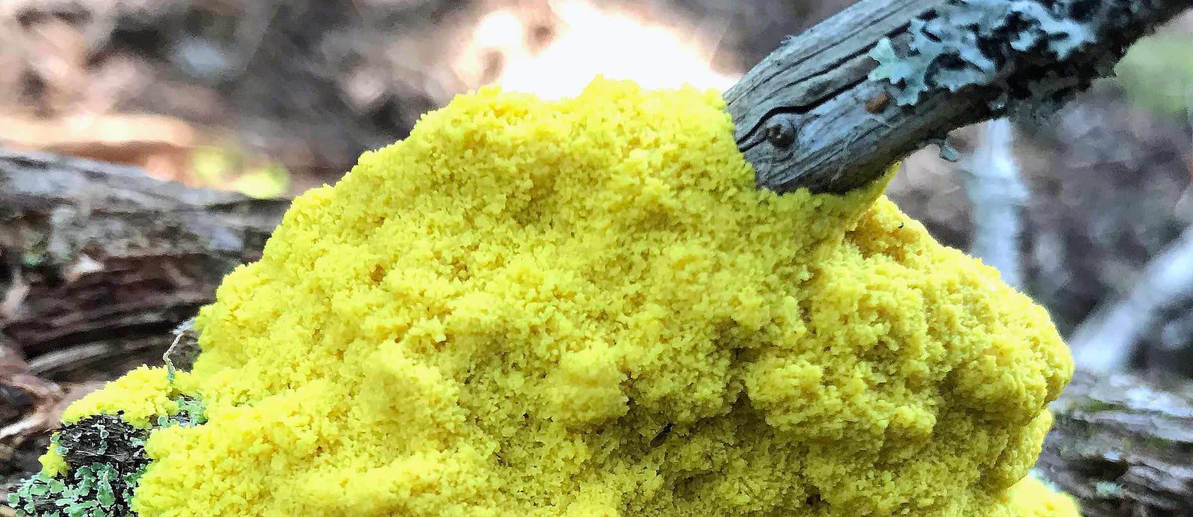 mcht-scrambled-egg-slime-2400x1040.jpg
