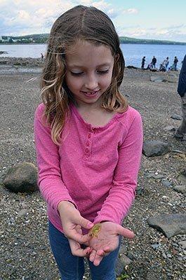 Sears Island Beach Exploration 265x400