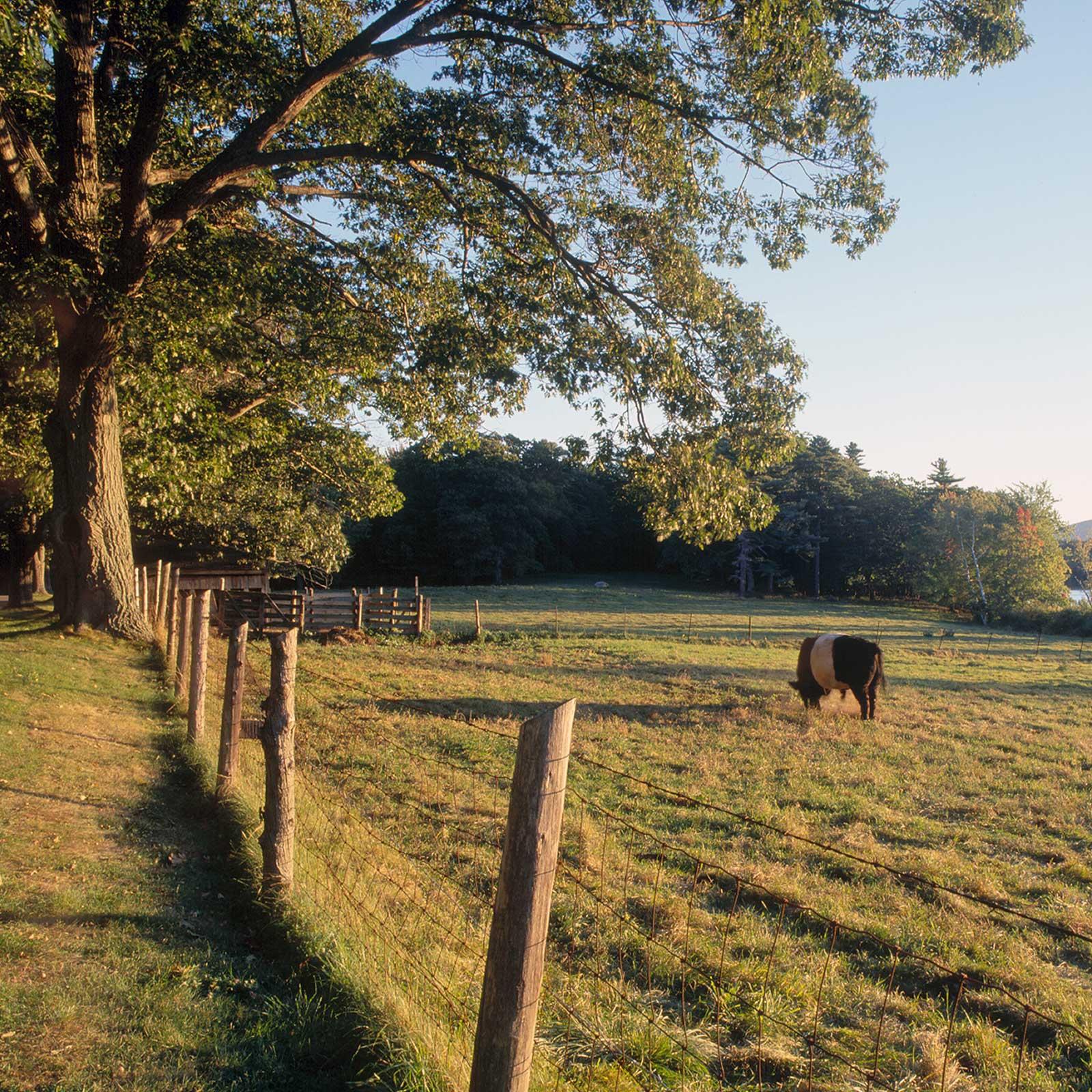 mcht-Aldermere_Farm_Rockport_Maine_5_-_2000_-_Sara_Gray-square