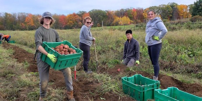 Members of the Knox County Gleaners and MCHT's Teen Ag program harvest food from Erickson Fields Preserve.